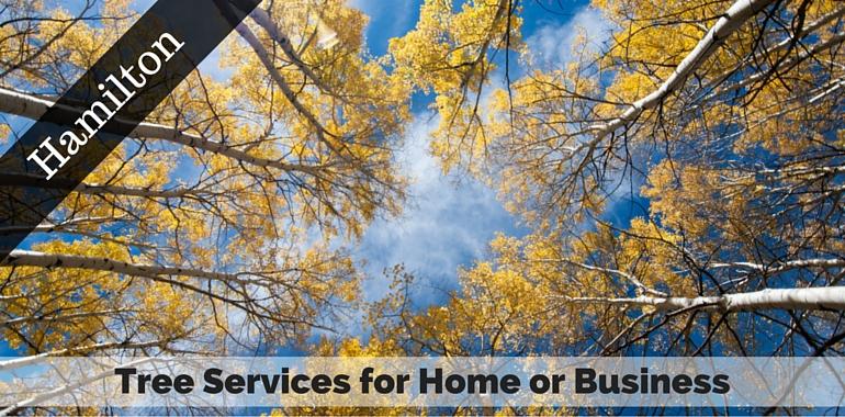 Hamilton, NJ Tree Services