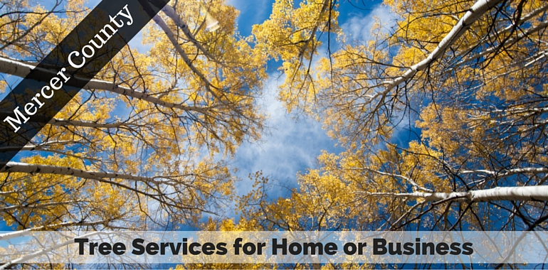 Mercer County NJ Tree Services