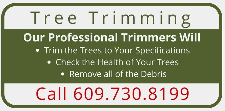 Tree Trimming Services Mercer, Hunterdon, Bucks Counties