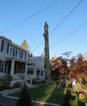 Tree Removal Hunderton County NJ - Call Arbor Barber Tree Service